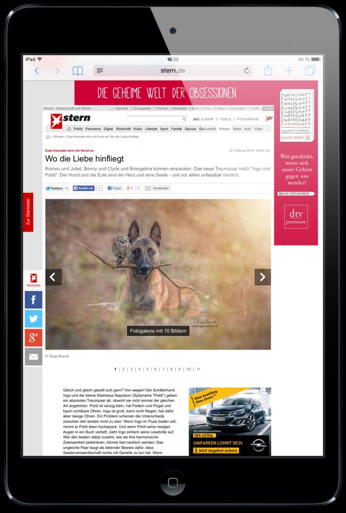 iPad-Safari-Reader-Ansicht-verfügbar-Lesbarkeit-1.png
